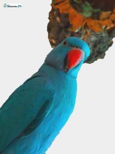 """Vogelhäuser, Vogelfutter und Vogelzubehör für Zier- und Gartenvögel im Vogelshop für Herne, Jena, Koblenz oder Regensburg. Korkrinde als ideale Beschäftigung für Ihre Hausvögel. Ihre Nymphensittiche, Sperlingspapageien und Wellensittiche – und Möbelgegenstände - sind happy Dank Rindenkork von der Korkeiche. Kork ist Top Vogelspielzeug – abrufbar per Paketversand mit kurzen Lieferzeiten- zum Beispiel auch nach Frankfurt am Main! Das anknabbern Ihrer Tapeten und Möbeln gehört ab sofort der Vergangenheit an! Rindenkork fokussiert und zieht das Interesse Ihrer Vögel wie ein Magnet an. Sie werden sich nicht mehr ärgern, weil Ihre gefiederten Freunde Ihren unermüdlichen Nagetrieb an Ihren Einrichtungsgegenständen ausgelassen haben. Ganz sicher ist Kork auch wesentlich """"bekömmlicher"""", da es ein absolutes Naturprodukt ist - frei - von Klebstoffen, Lacken oder sonstigen chemischen Elementen. Kork schützt Ihre Vögel somit auch vor der Aufnahme massiv giftiger Stoffe, die sicherlich für die kleinen Körper der Tiere absolut gesundheitsschädigend bis tödlich sind. Naturkork bietet sich hervorragend als Vogelsitzbrett, Vogelspielplatz und Ruheplatz für Ihre Wellensittiche, Kanarienvögel, Zier- und Sperlingsvögel an und schenkt Ihren Vögeln garantierten Knabberspaß. Oft fragen sich Vogelhalter in Dortmund, Bochum, Gelsenkirchen, Gladbeck oder auch in Hamburg und München und der gesamten """"Vogelfreund-Republik"""", welches Vogelzubehör für meinen Vogelkäfig oder meine Vogel Voliere gut und sinnvoll ist? Womit können sich meine Wellensittiche, Kanarienvögel oder Sperlingspapageien tagsüber beschäftigen, während ich das Vogelfutter verdienen muss? Bei der Wahl des """"richtigen Spielzeuges"""" für Ihren Wellensittich, Kanarienvogel oder Sperlingspapageien werden Sie sicherlich oft nach guten Vogelspielzeugideen suchen, an denen Ihre """"kleinen Schützlinge"""" ihre Freude haben? Wie kann ich bei meinen Freiflüglern den Fokus von meinen Möbeln und Tapeten abwenden? Gibt es vielleicht sogar """"gesundes """